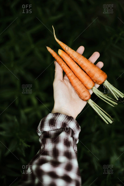 Woman  holding a bunch of carrots.