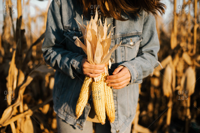 A woman holds corn in her hand in the middle of a corn field