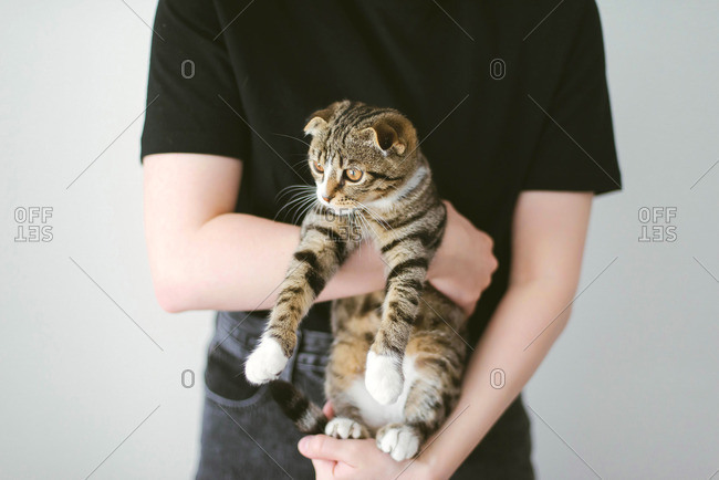 Young woman holding beautiful cat on white background