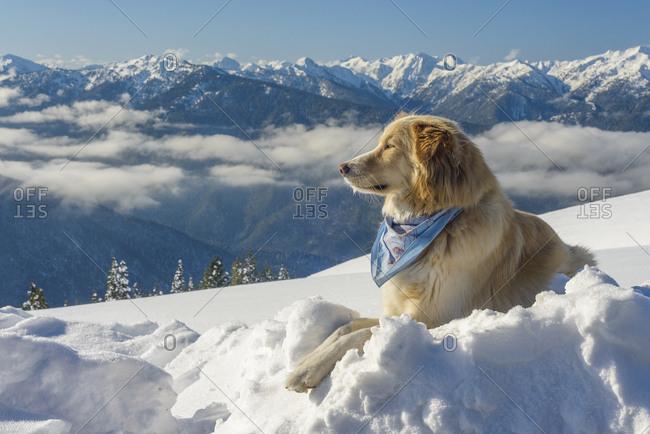 Dog in snowy mountain winter scene