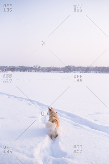 Rear view of dog on snow covered frozen lake