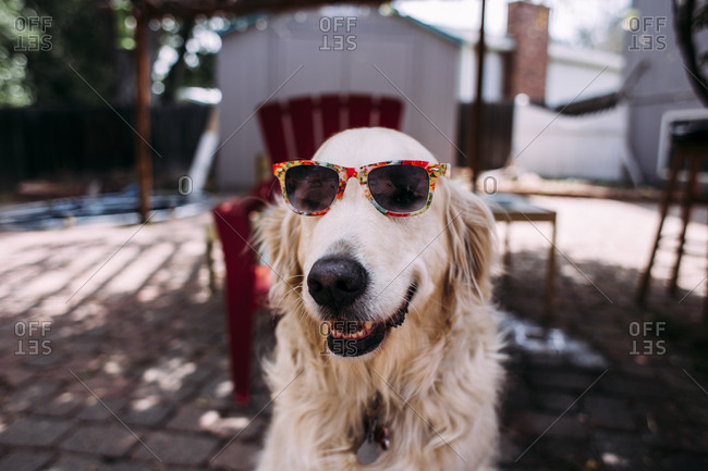 Dog in sunglasses sitting outdoors