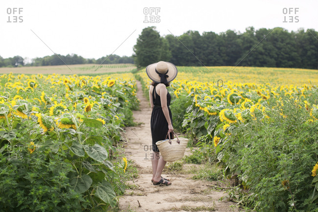 Side view of woman holding basket while standing on field amidst sunflowers at farm