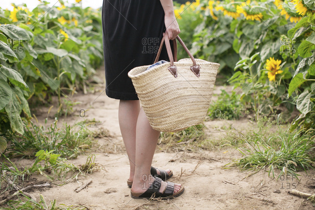 Low section of woman holding basket while standing on field amidst sunflowers at farm
