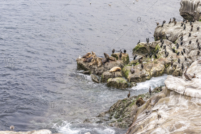 Seals and birds on the rocks at the La Jolla Cove.