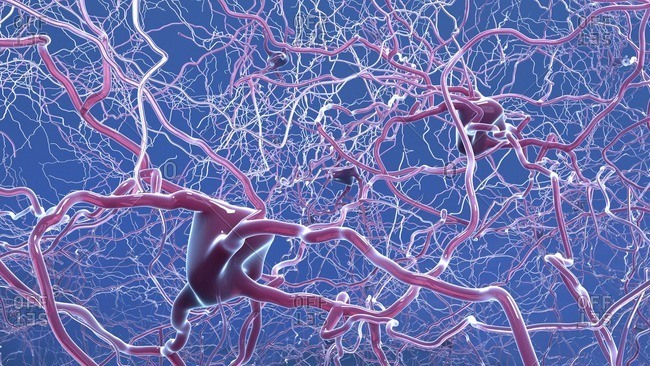 Nerve cells, illustration