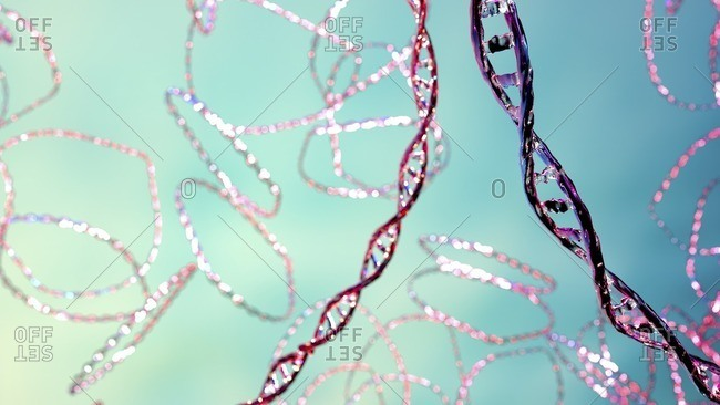 Plasmids, illustration