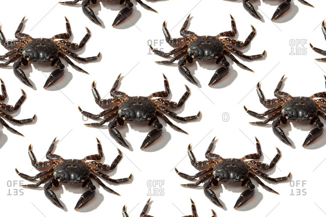 From above creative composition of big crazy brown crabs on white background