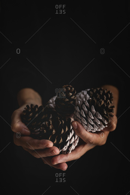 Anonymous person demonstrating handful of painted confer cones during Christmas celebration against black background