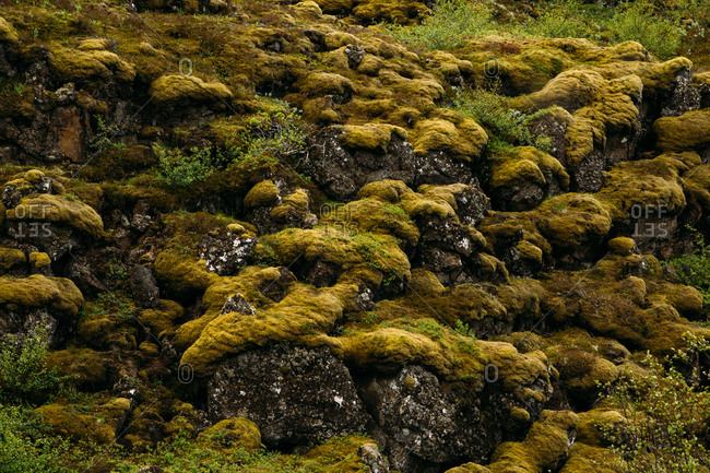 Botanical landscape of green and yellow moss on stones in Iceland