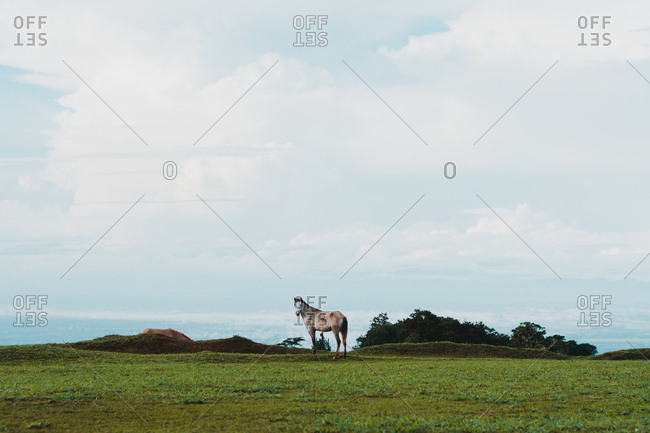 Horse on green lawn in countryside