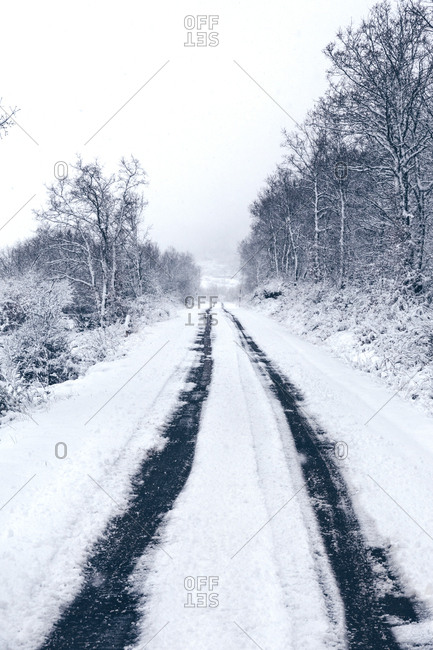 Snow covered empty country road with traces of cars leading away and forest along roadway in cloudy gloomy winter day