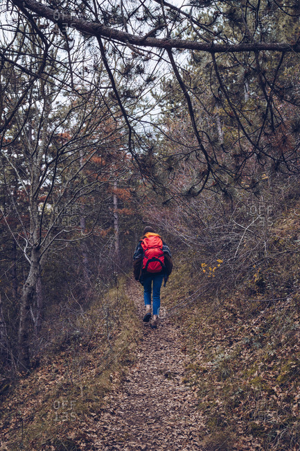 From behind person with bright backpack in warm clothes walking along road with dried leaves by bare trees on cloudy day