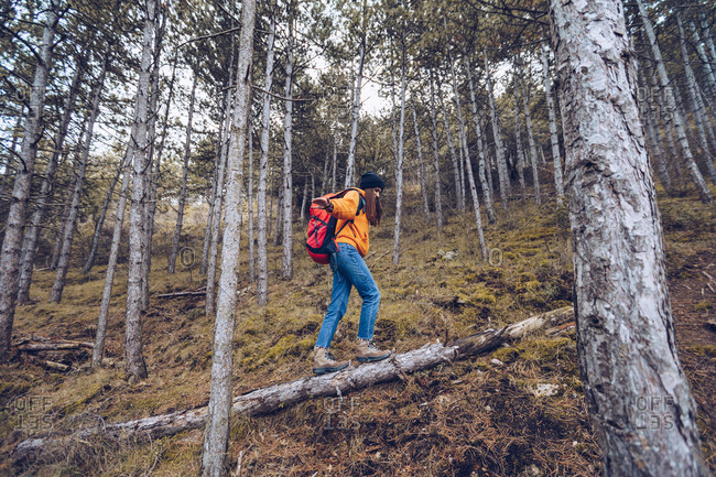 Side view of determined woman in warm clothes with backpack outstretching arms and walking along log in evergreen forest