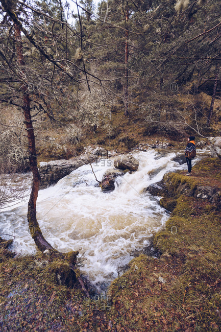 Woman in warm jacket standing by furious torrent at evergreen forest on cold autumn day