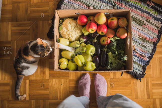 Cat reaching into a box filled with fresh produce