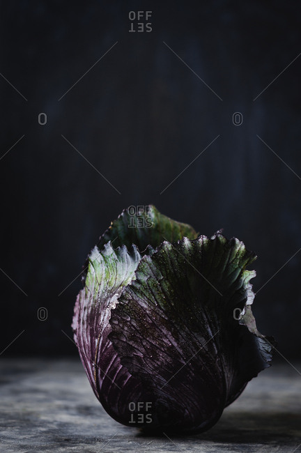 Still life of one red cabbage