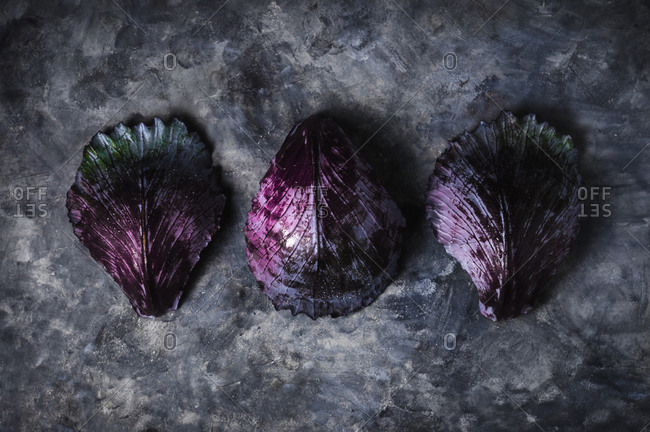Three cabbage leaves on moody grey backdrop