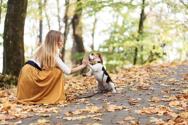 """The woman teaches the beagle puppy the command """"Give Me Paw"""""""