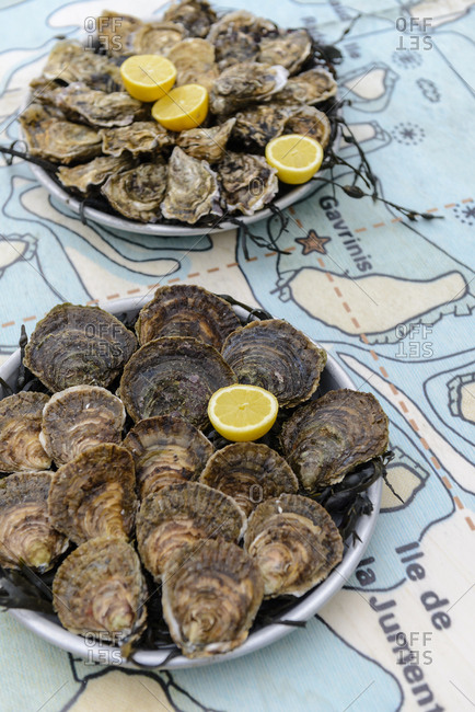 Oysters plate in Baden, Morbihan, France