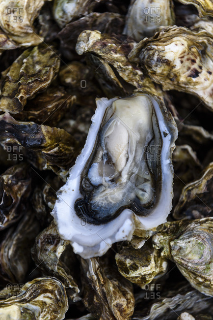 Close up of fresh oysters