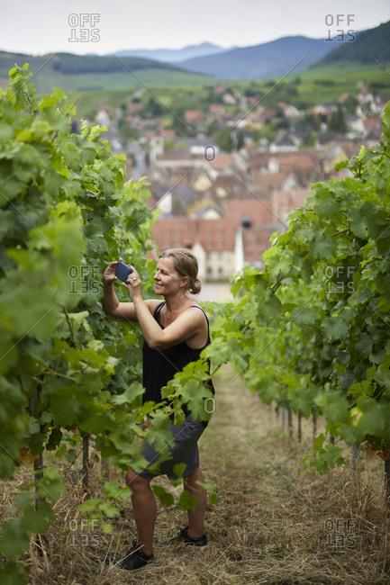 Woman photographing vineyard