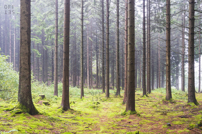Trunks of trees in forest