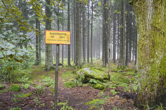 Sign in forest