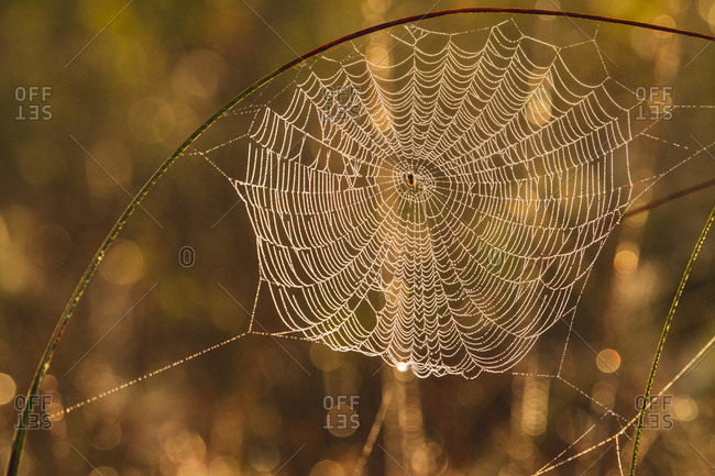 View of spider web at sunset