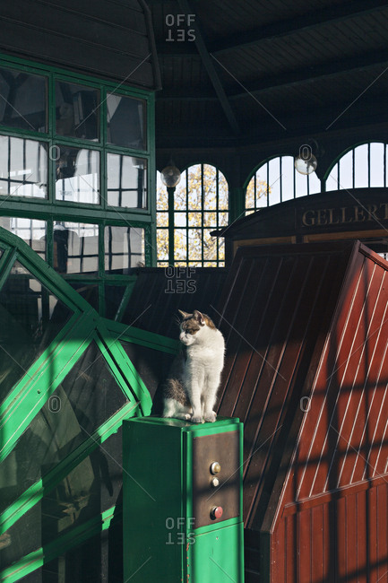 Budapest, Hungary - November 11, 2019: Cat sitting in the station of Buda Castle Funicular in Budapest
