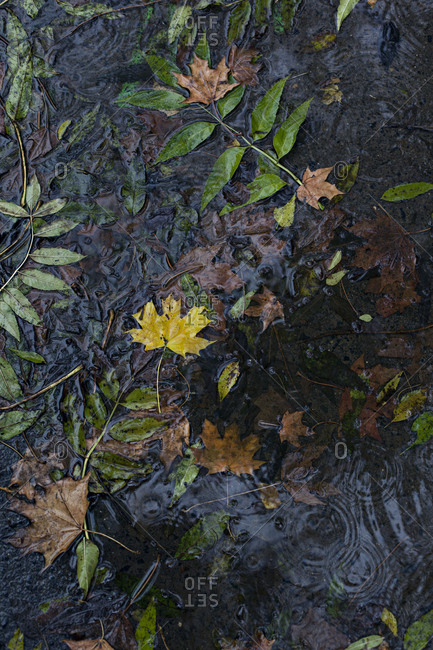 Water puddle in autumn during rain with leaves