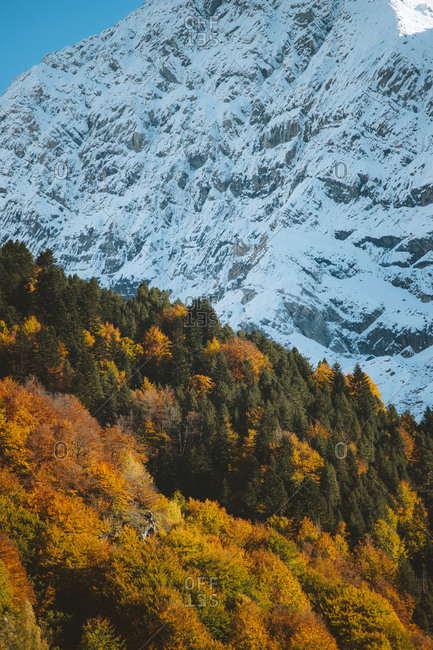 Autumn tones on the trees in Pyrenees during fall with snowy mountain in the background