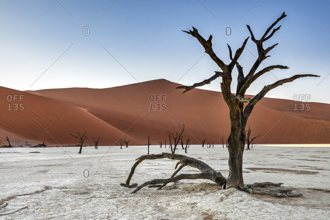 Old dead trees with Big Daddy dune behind, Deadvlei, Namib-Naukluft National Park, Sesriem, Namibia