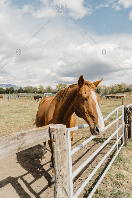 Horse standing on a corral