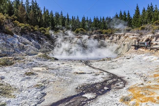 Hell's Gate- Geothermal Park- Tikitere- Rotorua- North Island- New Zealand