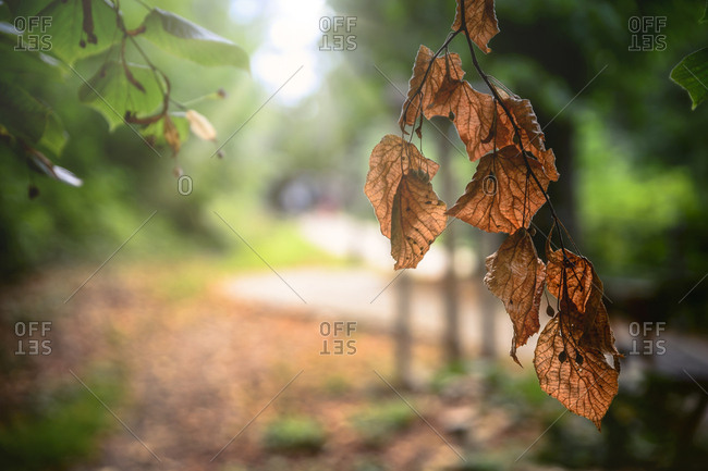 Autumnal leaves in backlight