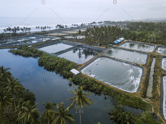 Aerial view of shrimp farm- Bali- Indonesia