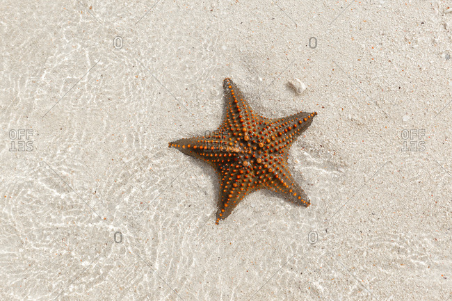 Overhead view of sea star in tide pool on Zanzibar island, Tanzania