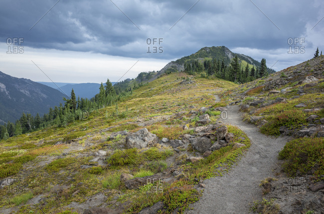 View of the Pacific Crest Trail in alpine meadow, Goat Rocks Wilderness, Gifford Pinchot National Forest, Washington