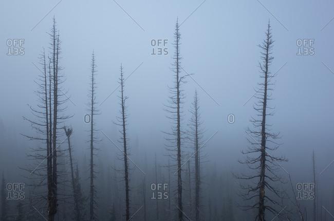 Along the Pacific Crest Trail, Mt. Adams Wilderness, Washington