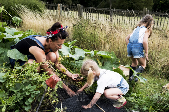 Woman and two girls in a vegetable garden, harvesting potatoes.