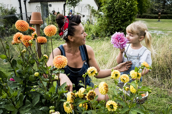 Girl and woman kneeling in a garden, picking pink and yellow Dahlias.