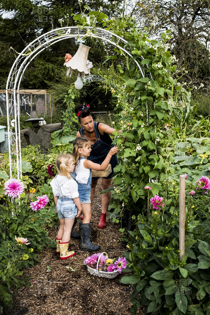 Woman and two girls standing underneath arch in a garden, picking green beans.