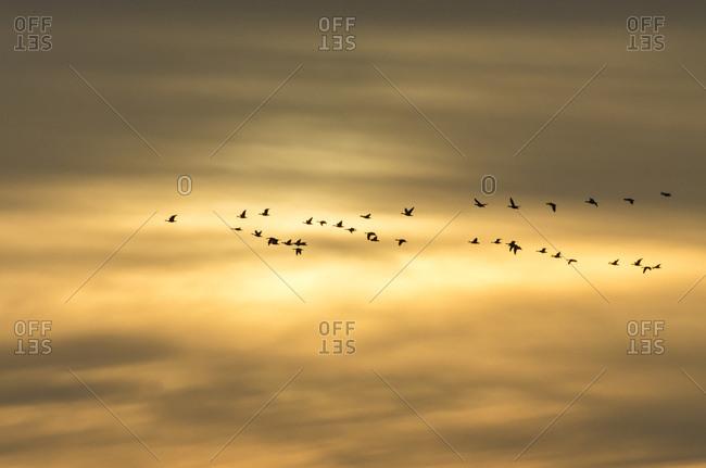 Sky, cranes, formation flight, rhedener geestmoor,