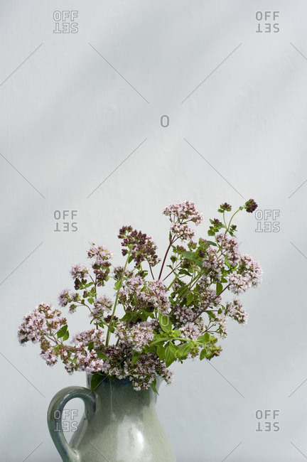 Blossoming oregano in a vase on a table