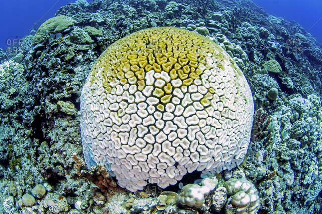 Climate change, coral bleaching, pacific ocean