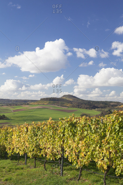 Vineyards close oberstenfeld in autumn, baden-wurttemberg, Germany