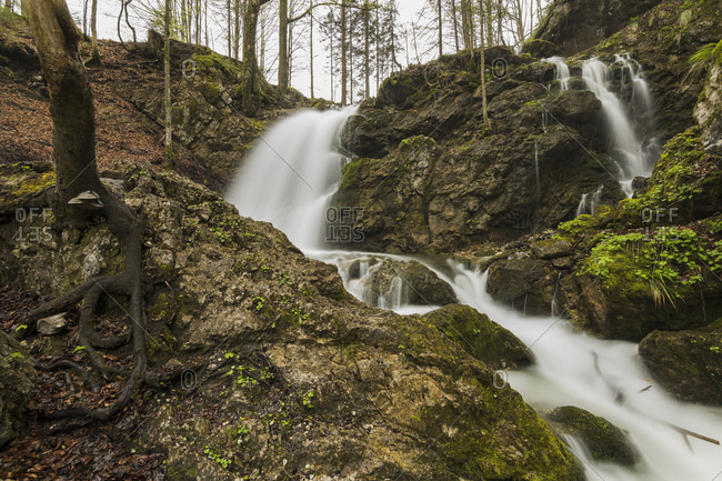 Josefstal waterfall at the schliersee in the bavarian alps, in the foreground roots and tree fungi