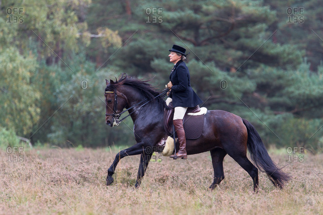 September 7, 2013: Horseback hunting in the lueneburg heath
