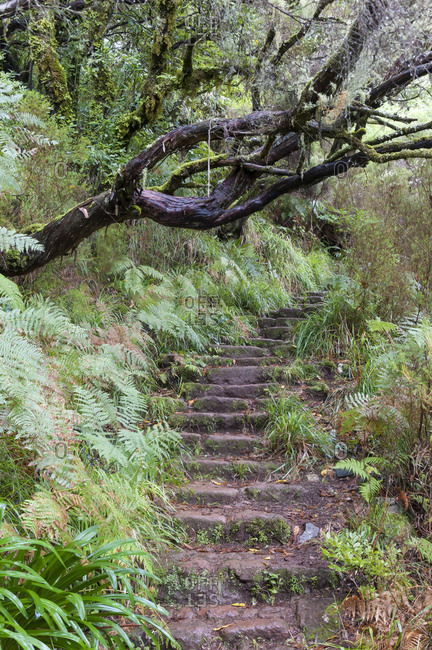 Madeira, steep steps, wet trail